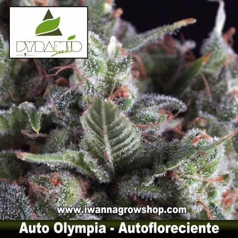 Auto Olympia