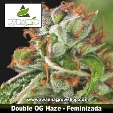Double OG Haze