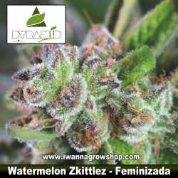 Watermelon Zkittlez