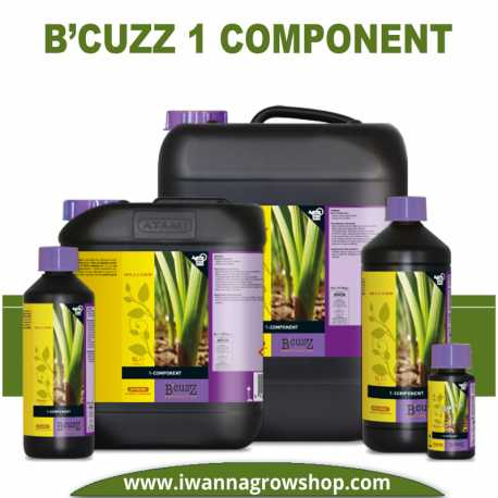 B'Cuzz 1 Component