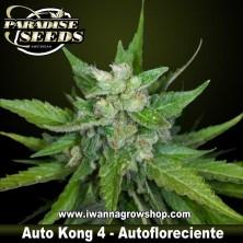 Auto Kong 4