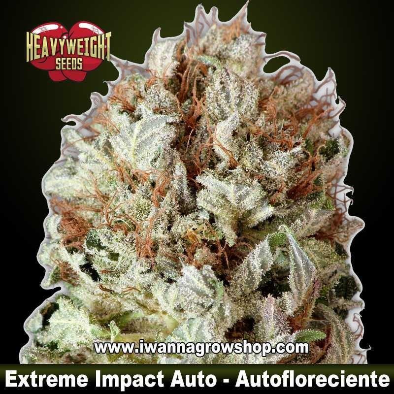 Extreme Impact Auto