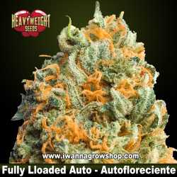 Fully Loaded Auto