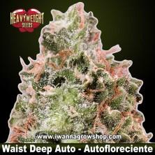 Waist Deep Auto