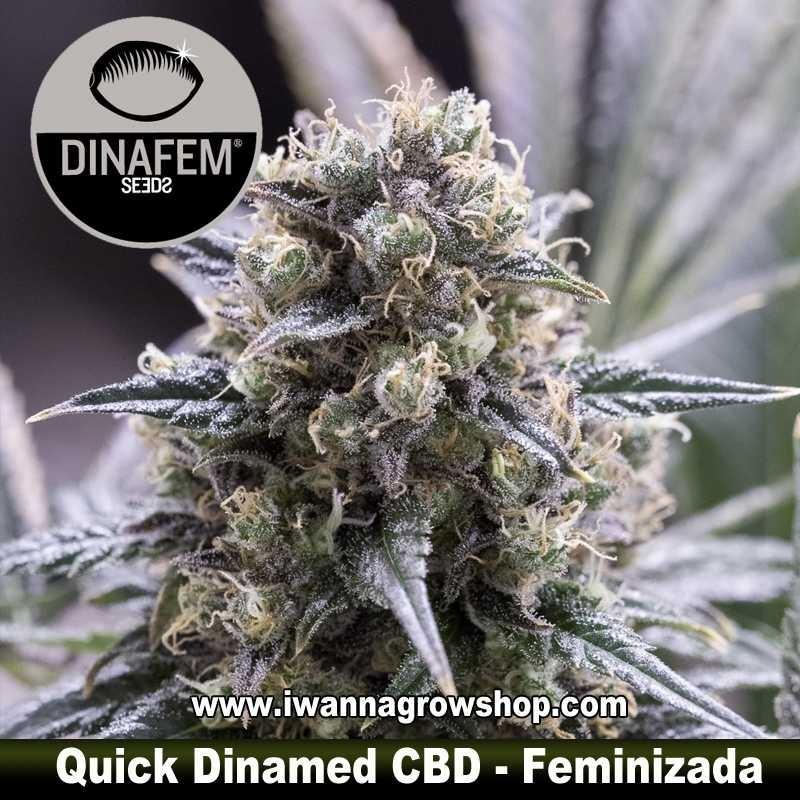 Quick Dinamed CBD