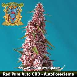 Red Pure Auto CBD