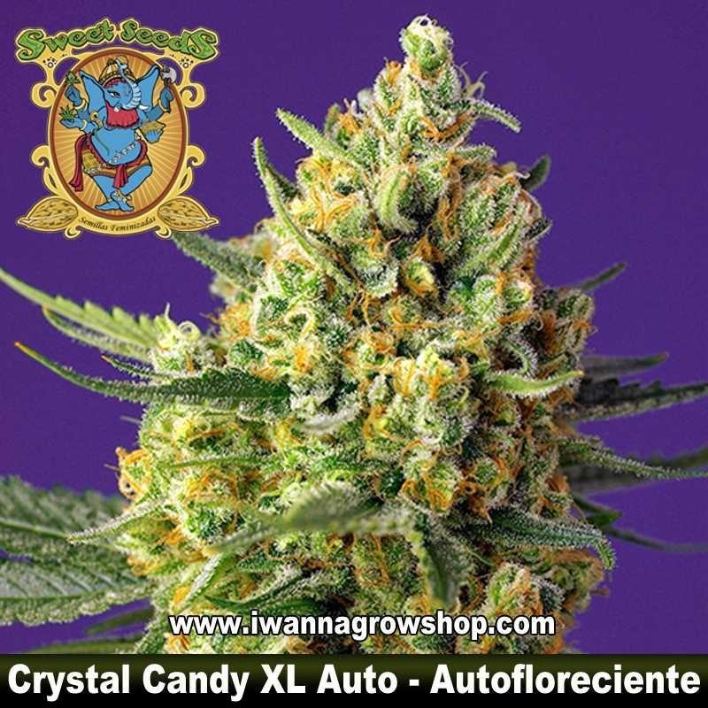Crystal Candy XL Auto