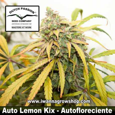 Auto Lemon Kix