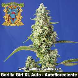 Gorilla Girl XL Auto