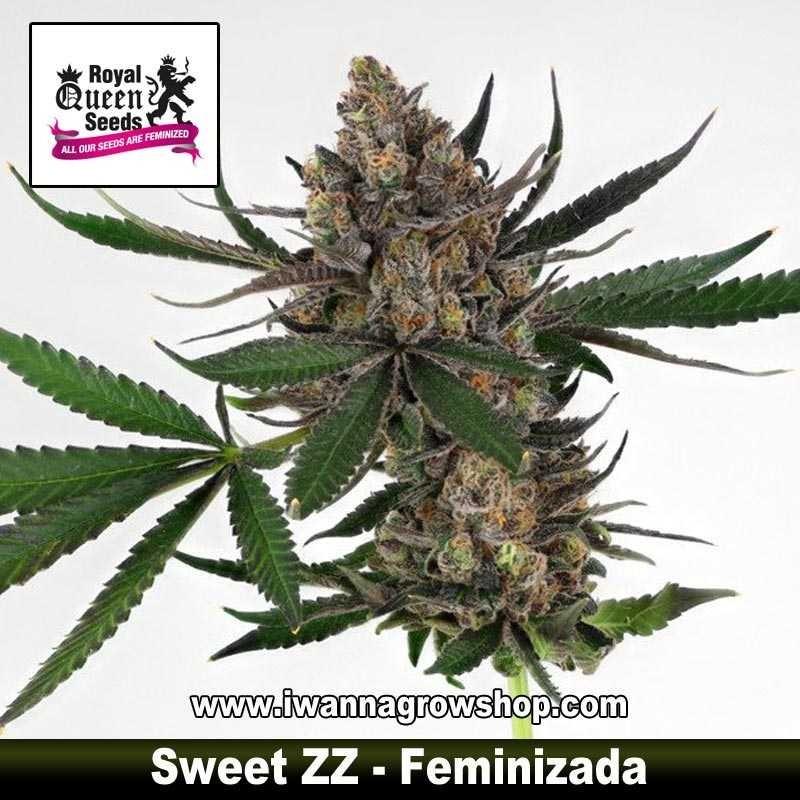 Sweet Zkittlez