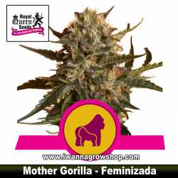 Mother Gorilla