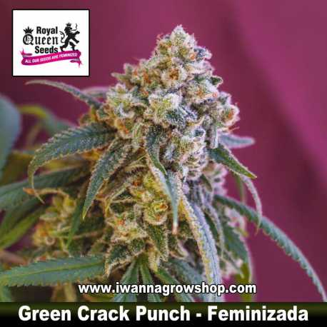 Green Crack Punch