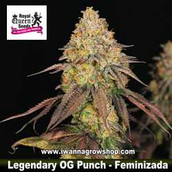 Legendary OG Punch