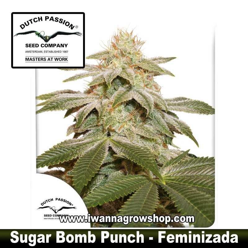 Sugar Bomb Punch
