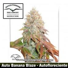 Auto Banana Blaze