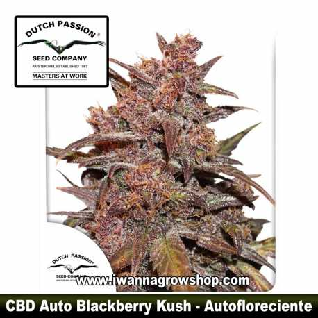 CBD Auto Blackberry Kush