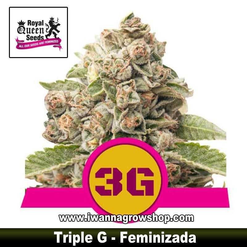 Triple G