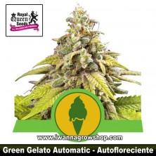 Green Gelato Auto