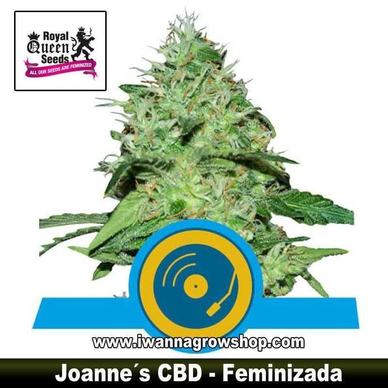 Joanne's CBD