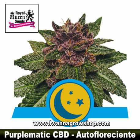 Purplematic CBD