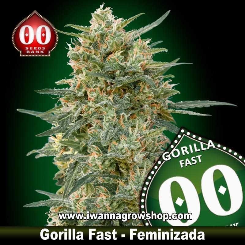 Gorilla Fast