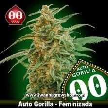 Auto Gorilla