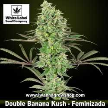 Double Banana Kush
