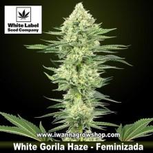 White Gorilla Haze