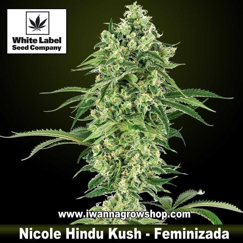 Nicole Hindu Kush