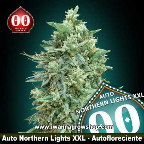 Auto Northern Lights XXL