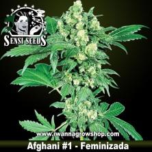 Afghani 1 – Feminizada