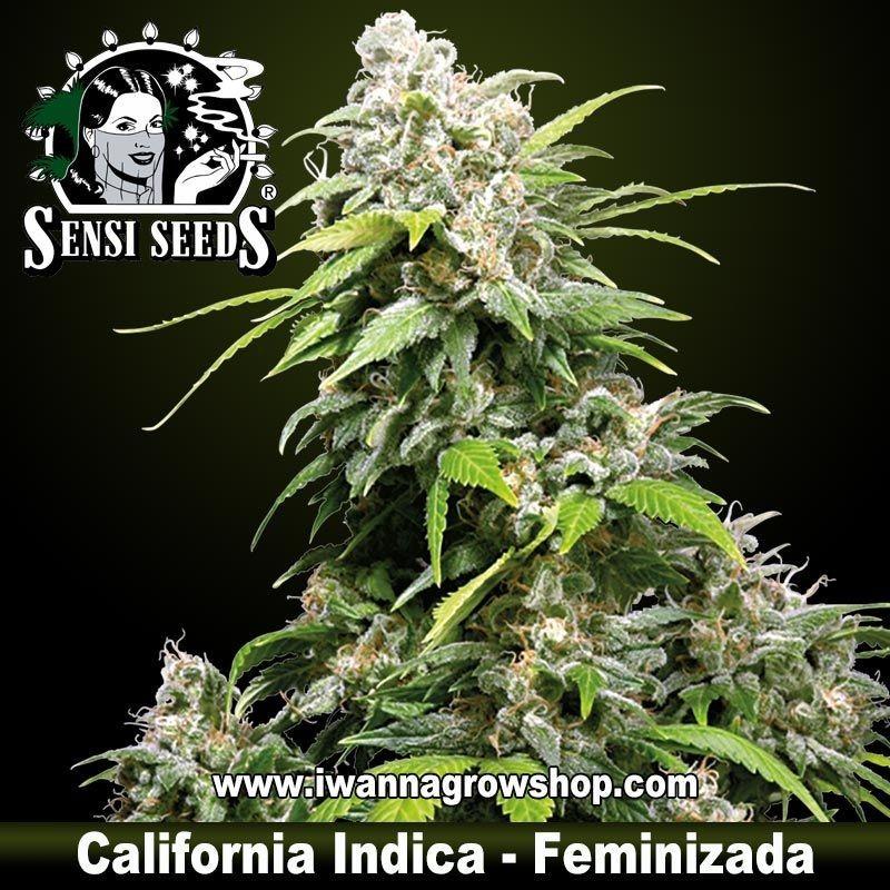 California Indica