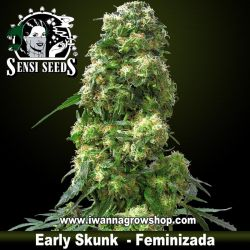 Early Skunk – Feminizada
