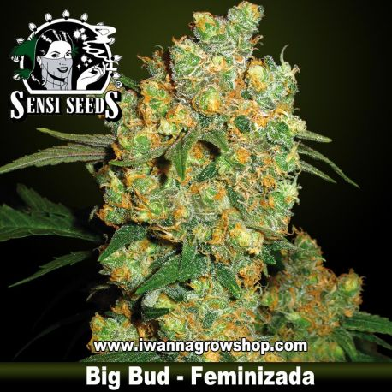 Big Bud