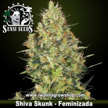 Shiva Skunk – Feminizada