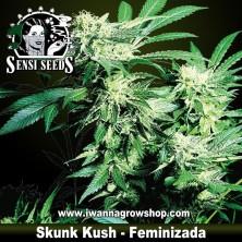 Skunk Kush – Feminizada