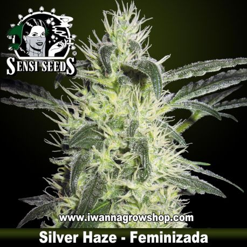 Silver Haze 9
