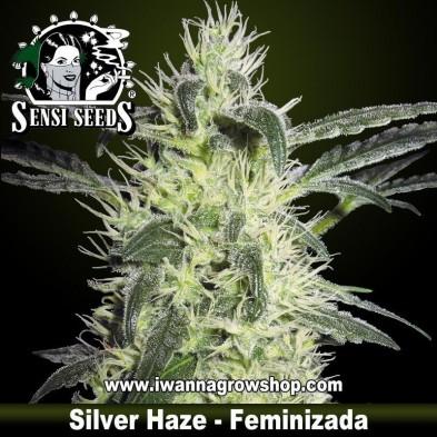 Silver Haze – Feminizada