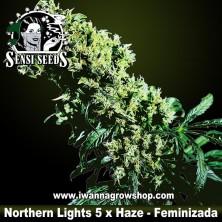Northern Lights 5 x Haze