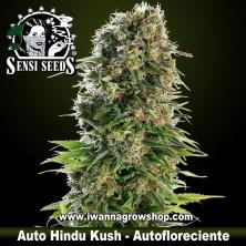 Auto Hindu Kush – Autofloreciente