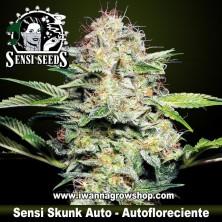Sensi Skunk Auto – Autofloreciente