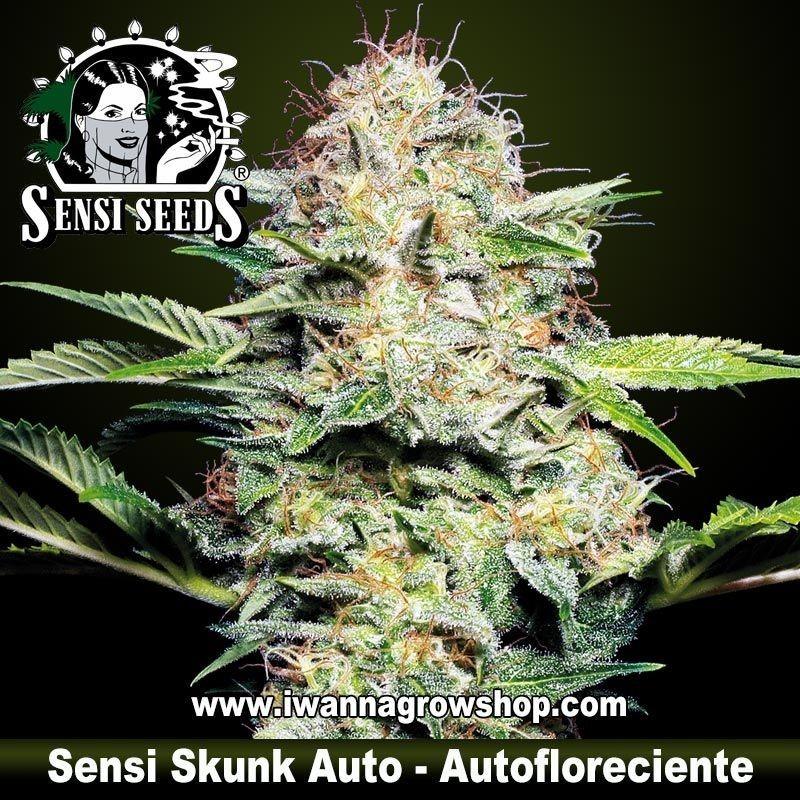 Sensi Skunk Auto