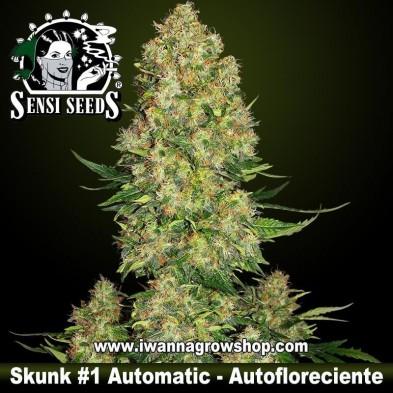 Skunk 1 Automatic – Autofloreciente