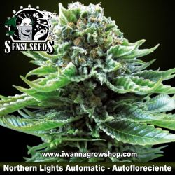 Northern Lights Automatic – Autofloreciente