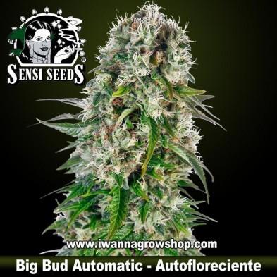 Big Bud Automatic