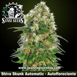 Shiva Skunk Automatic