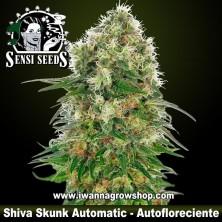 Shiva Skunk Automatic – Autofloreciente