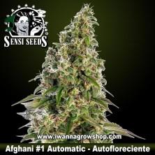 Afghani 1 Automatic – Autofloreciente
