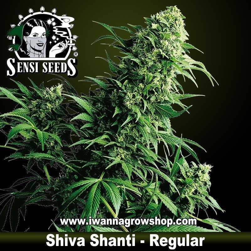 Shiva Shanti Regular