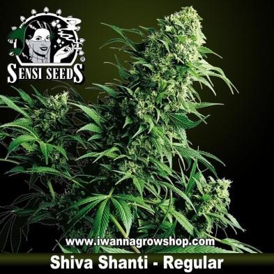 Shiva Shanti – Regular